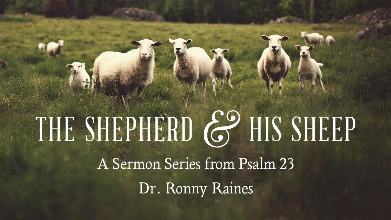 The Shepherd & His Sheep